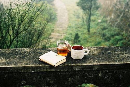 A la découverte du thé blanc d'Ely et Romy