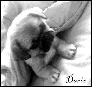Dario' <3