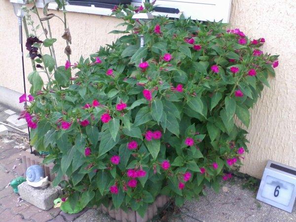 fleurs de mon jardin 2013