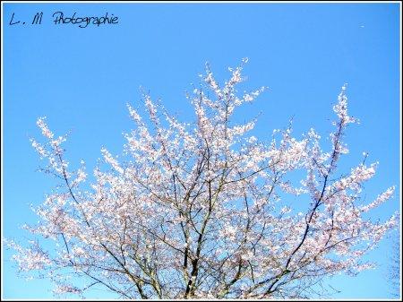 Photographie N°25 _ Un début de printemps ...