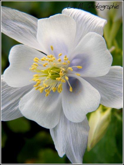 Photographie N°28 _ Un début de printemps ...
