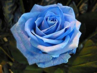une fleure :)