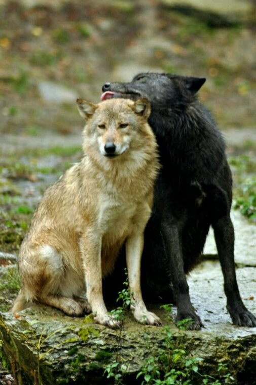 KDO pour toi mon amie de la part du loup solitaire que je suis !!
