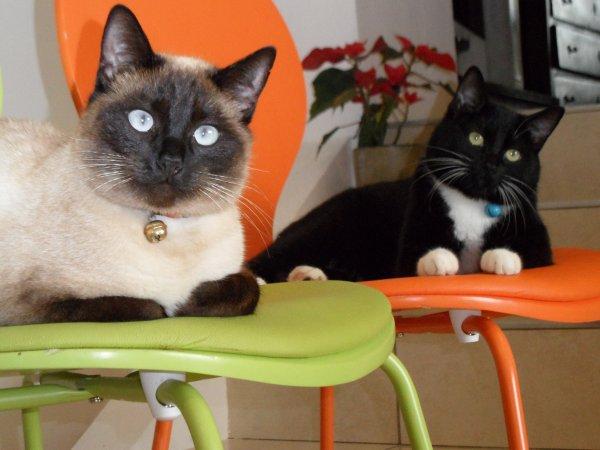 Mes chats, Sakura et Kiara