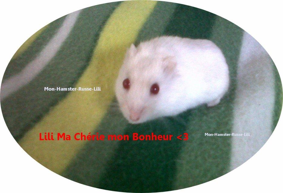 Entre dans le petit Monde de ma Hamster Lili<3