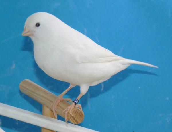 même oiseau