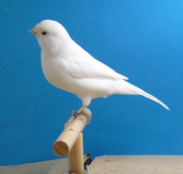Même oiseau : bague 011