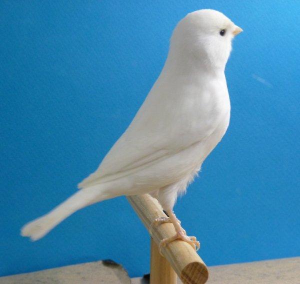 Même oiseau : bague 041