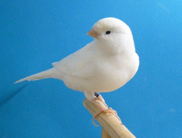 Même oiseau : bague 074