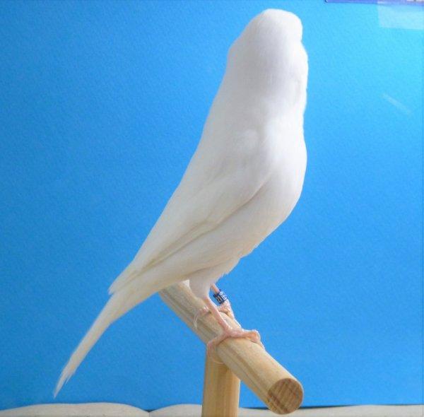 Même oiseau : beau maintien !