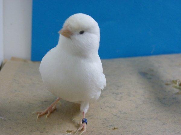 Oiseaux réservés partis ce matin pour Pontivy