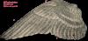 La Periode de la Mue ( vue sur le pigeon voyageur belge) traduction himself
