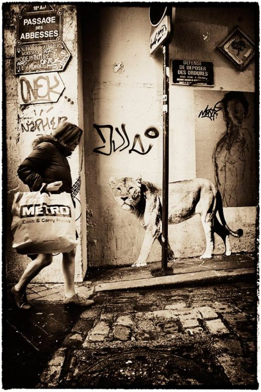 Des animaux sauvages dans les rues de Paris