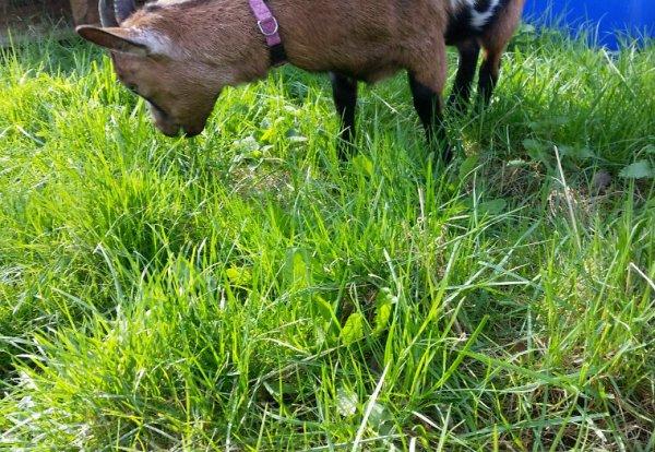 Hum que l'herbe est fraîche cela croque sous mes dents.