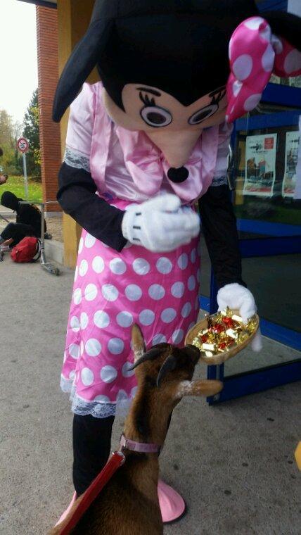 Mimi lui présente un bonbon. les chèvres ne mangent pas de bonbons.