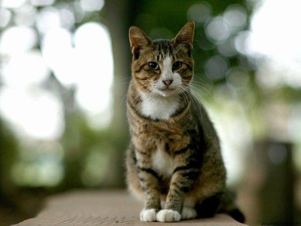 mon chat :)