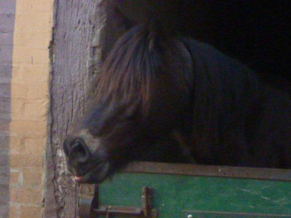 Les grimaces de bébé cheval !