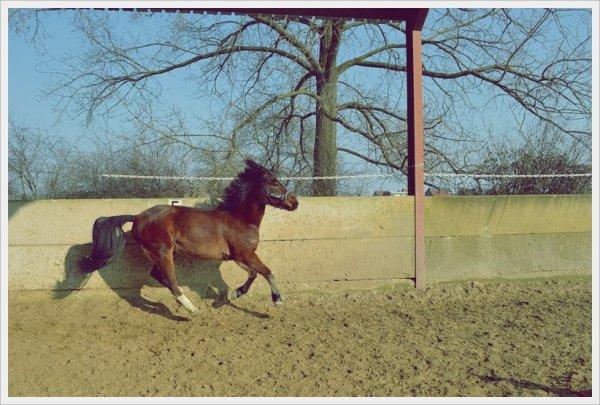 Présentation du poney
