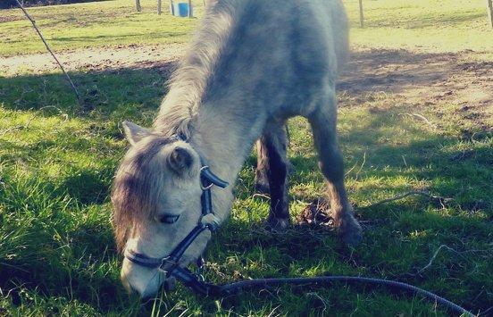 Parlez de moi comme vous le voulez, mais surveillez votre langage quand vous parlez de mon cheval.