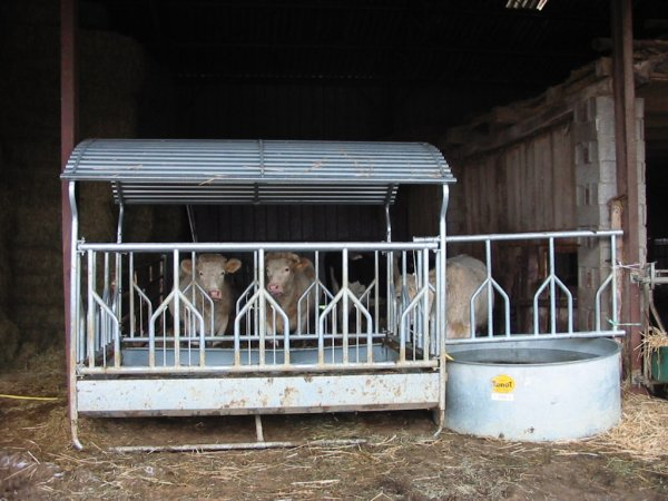 la case improviser des vaches