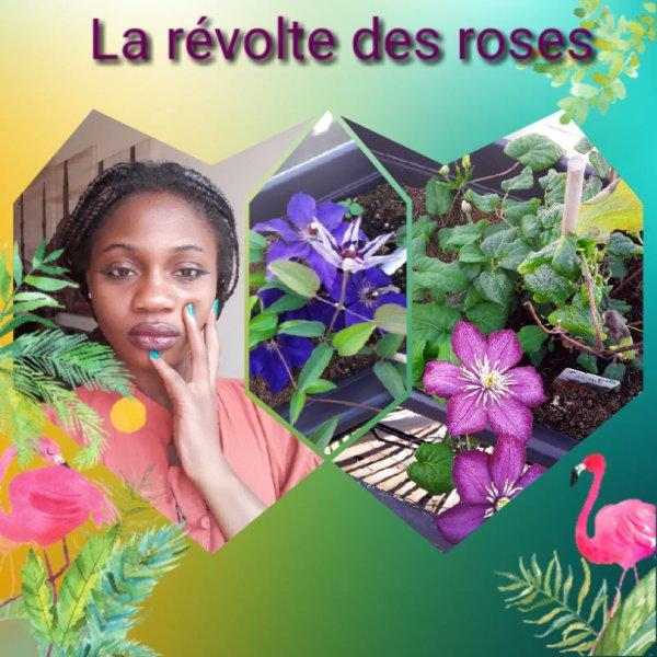 La révolte des roses......