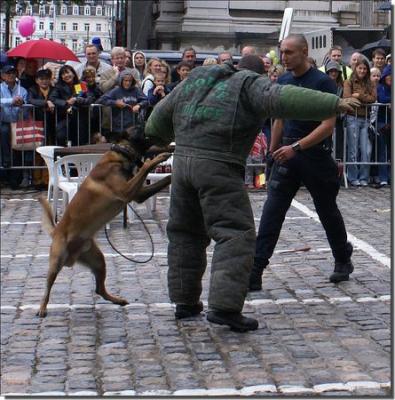 Blog de canine25 - =] Brigade Canine De liiège