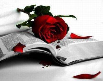 l'amour c'est comme une rose rouge avec des epines, les epines pour le mal  et rouge comme le sang pour la souffrance