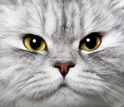 chat alors!!!!!!!!!!