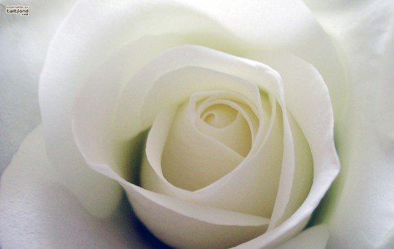 pour toi mon ami , mon grand frere  repose en paix , c'est dure de te dire adieu
