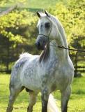 Photo de HorsesArabians