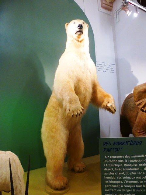 Le Muséum d'histoire naturelle de Lille