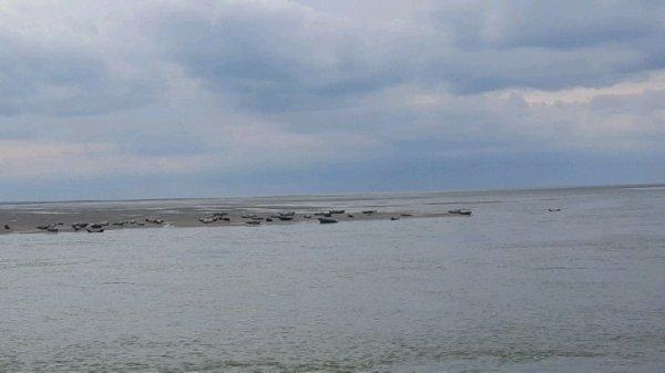 Petite balade a la mer et voir des phoques ces juste incroyable
