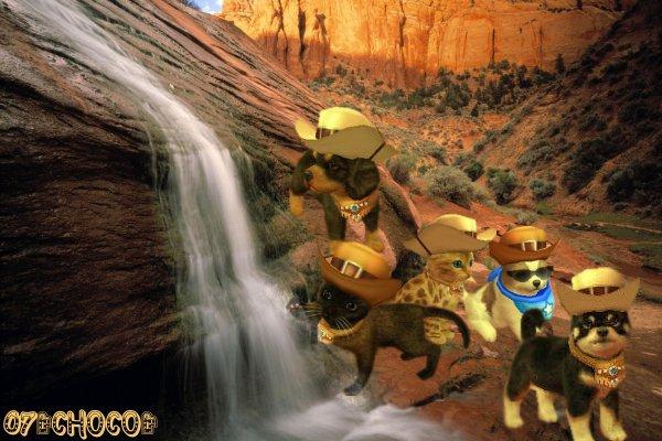 **COW BOY LAND** AU CANYON