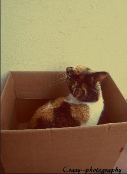 Canelle(loni). Mon bébé. ♥