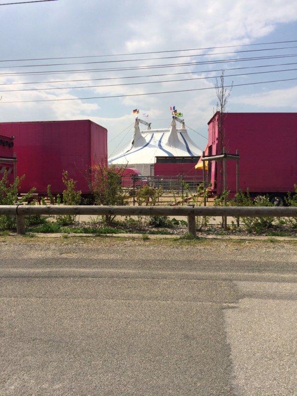 ⭐️ Cirque de St petersbourg ⭐️