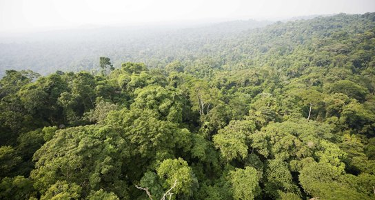 Sauvons vite la forêt amazonienne !