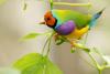Adorable petit oiseau