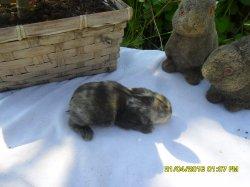 nouvelles fotos du1 bebes de fifie et junior angora nain a 9 jour