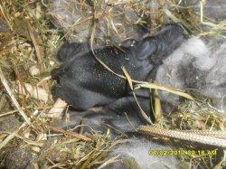nouvelle fotos des 2 bebes de dory et snoupi a 2 jour