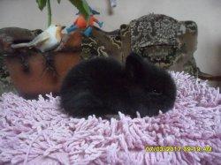 nouvelles fotos des 4 bébé de juliette et roméo extra nain a 1 moi