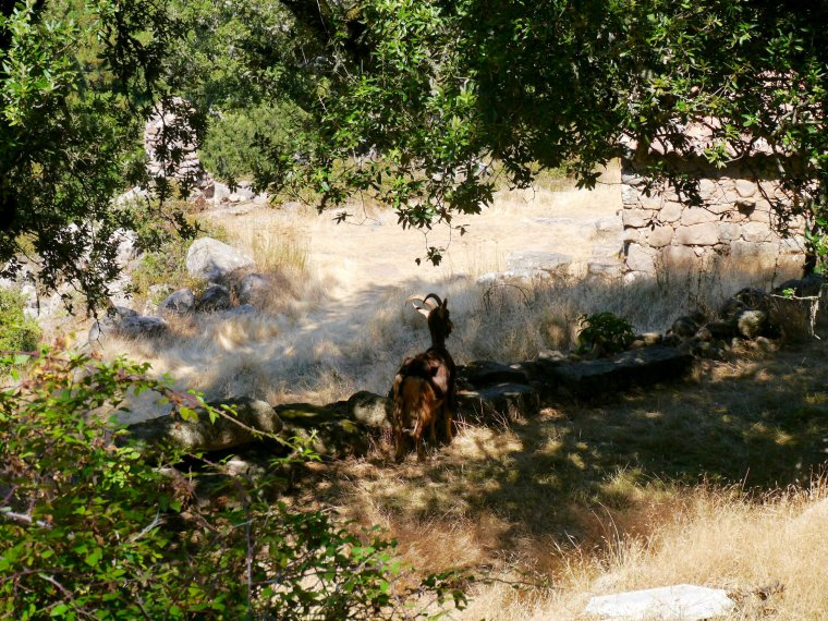 Les bergeries de Naseu
