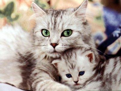 trop trop beau les deux chat qui se font des calin