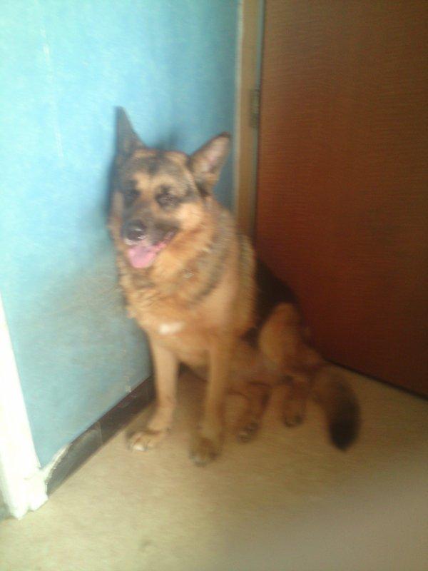 mon chien Max