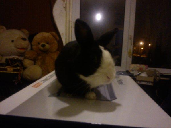 mon lapin Lapinou