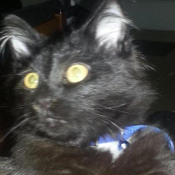 voiiîci mon chat :D