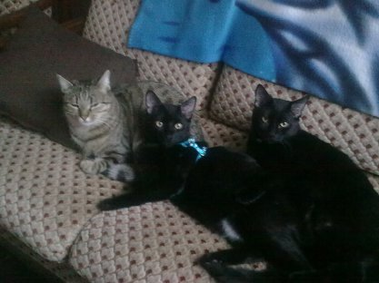 /!\  My CaTs , Calin Junior et Spider  /!\