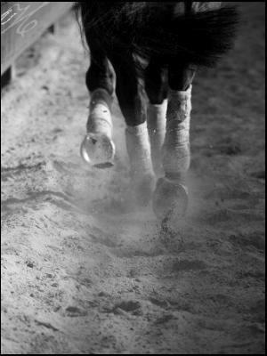 Blog de le-cheval-x