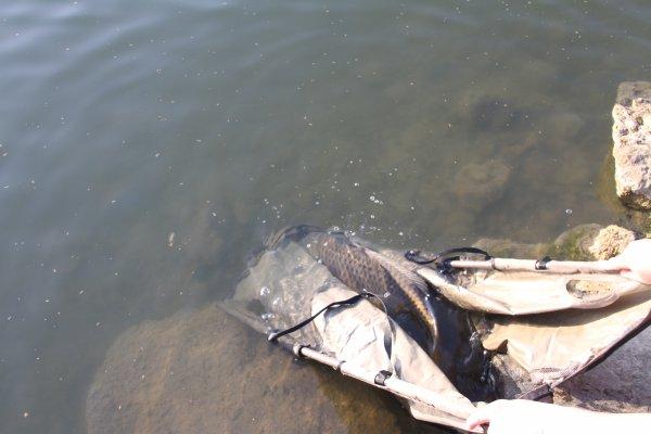 premier fish de 2012