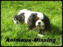 Photo de Animaux-Missing
