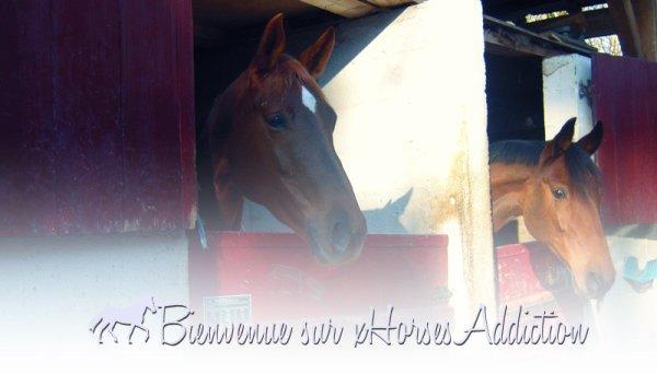 « Le cheval est la plus noble conquête que l'homme ait jamais faite. » [Georges-Louis Leclerc de Buffon]